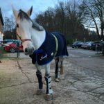Goliath - unser neues Voltigierpferd