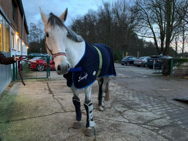 Goliath – unser neues Voltigierpferd